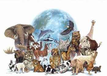 Mensaje Inspiracional. LOS ANIMALES DEL ERMITAÑO